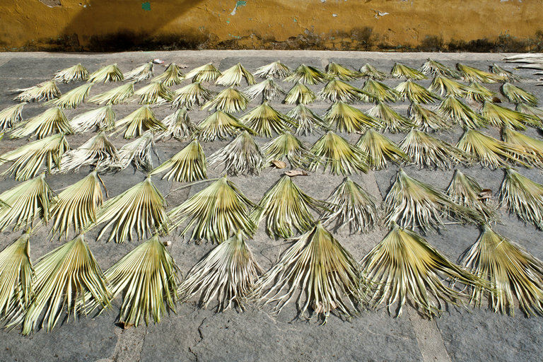 Carnauba_drying_2